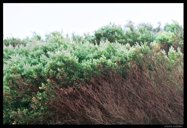 Close-up of coastal plants
